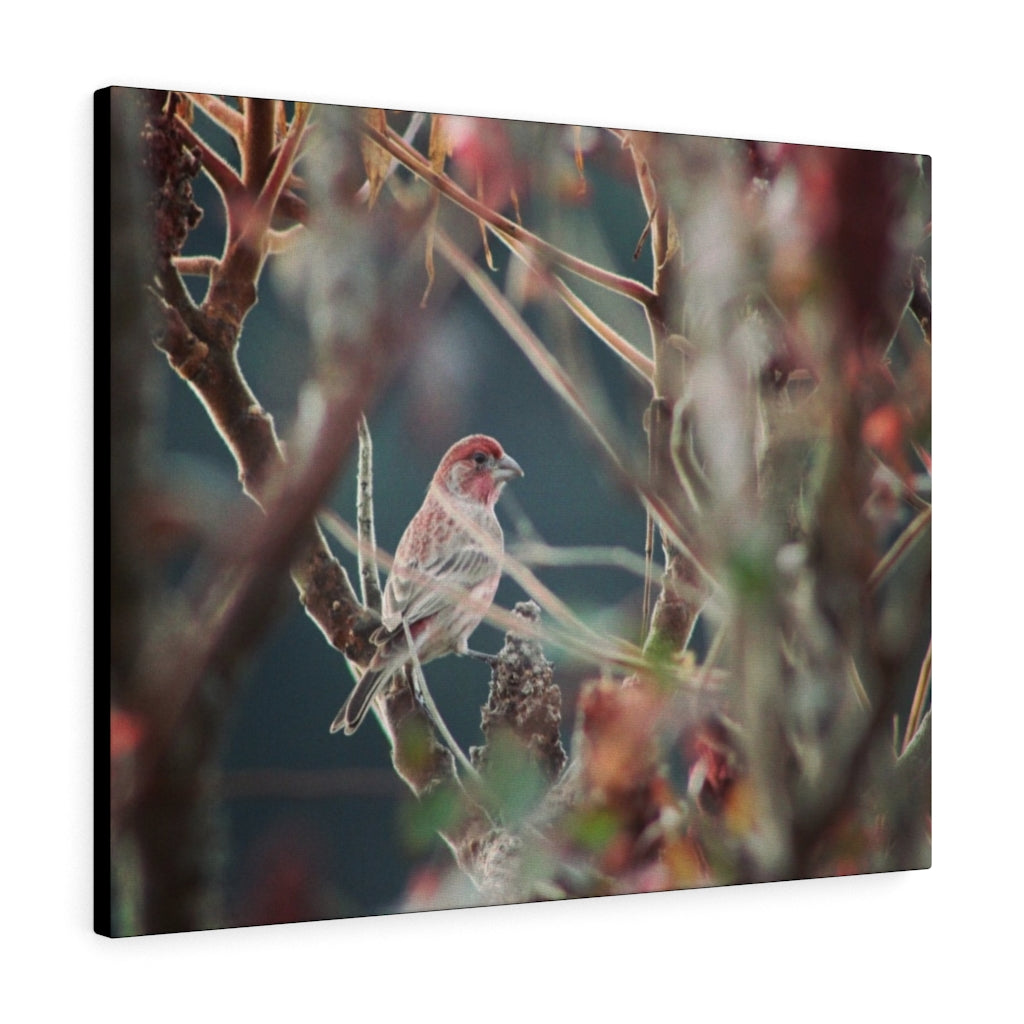 House Finch in the Sumac Print on Canvas - www.thedesigntank.com