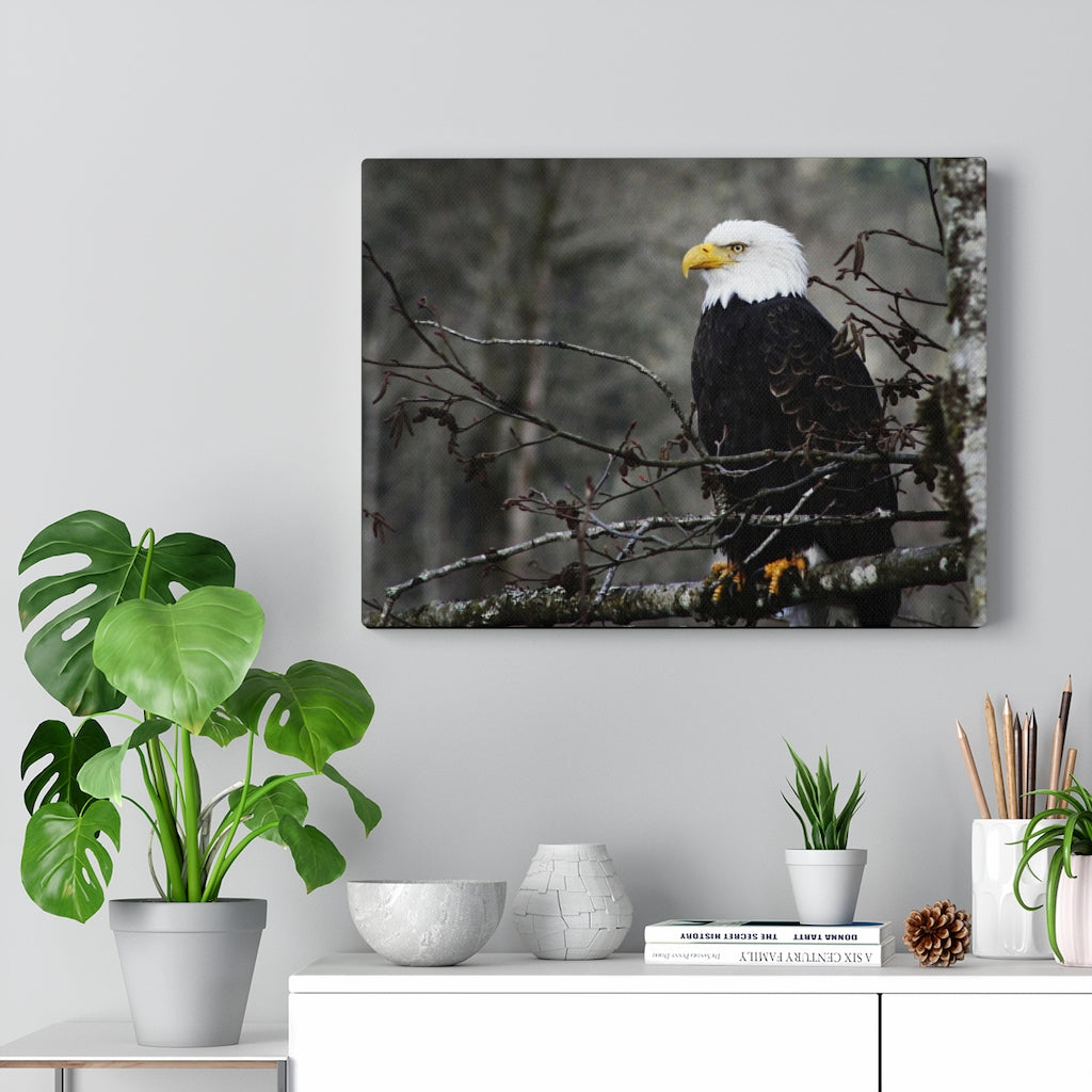 American Bald Eagle Print on Canvas - www.thedesigntank.com