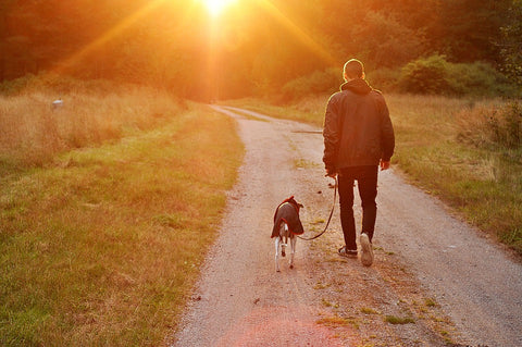 4 Tips for Mastering Your Dog Walk (And Any Other Behavior You Want to Condition)