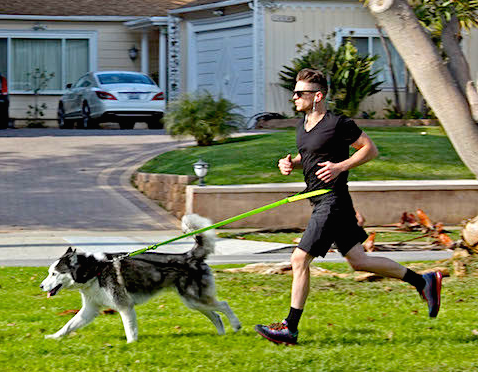 4 Tips For Walking/Running With Your Dog in the City