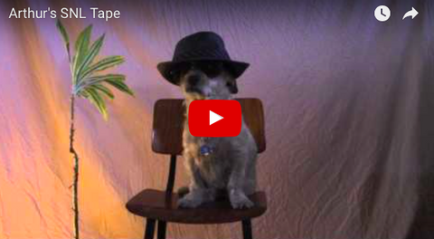 Your Next SNL Host Could Be A Dog ... This Dog [FUNNY VIDEO]
