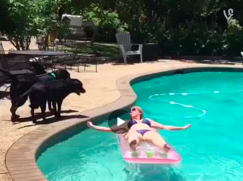Dog-Shark Attacks Lady Swimming in Pool! [VIDEO]