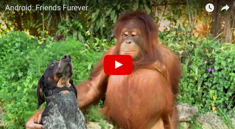 Samsung's Friends Furever Commercial Will Warm Your Heart [VIDEO]