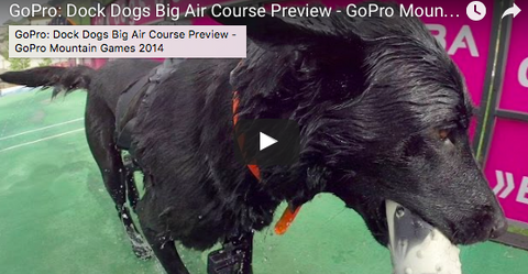Athletic Pups Creating a Splash at this Years GoPro Mountain Games [VIDEO]