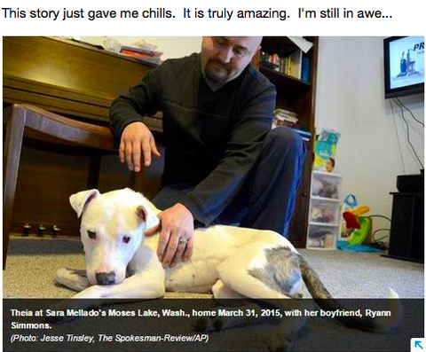 Miracle Dog Has The Most Amazing Survival Story [NEWS]