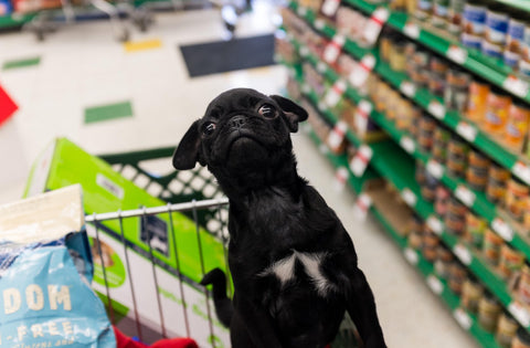10 Stores Where Your Dog Can Shop At Your Side