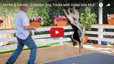 Hollywood Movie Dog Trainer Is a True PAWfessional [VIDEO]