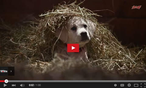 budweiser superbowl commercial lost puppy