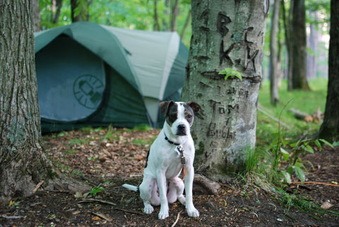 Camping with dogs pictures
