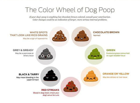 Dog Poop Color Infographic