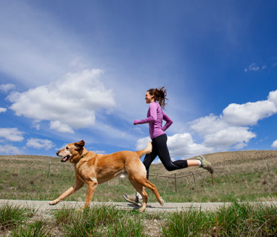 Best Running Dogs