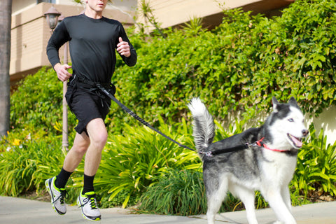 best running pack for dog owners