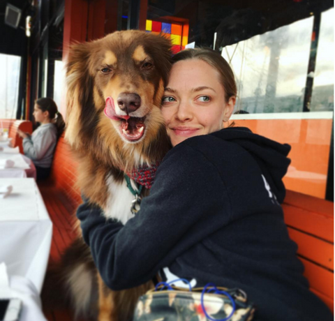 amanda seyfried dog finn instagram
