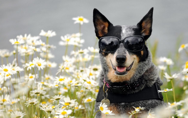 best dog accounts to follow on instagram