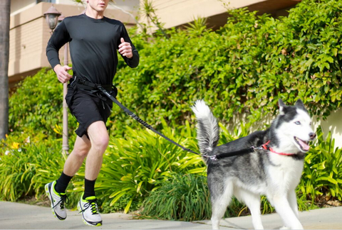 best running hiking walking pack for dog owners sportpack sportleash