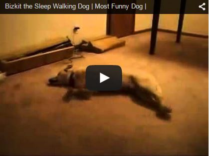 bizkit the sleepwalking running dog
