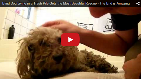 blind dog rescued inspirational rescue story