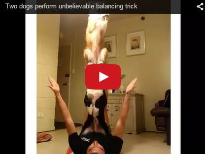 border collies perform amazing balancing trick with their owner