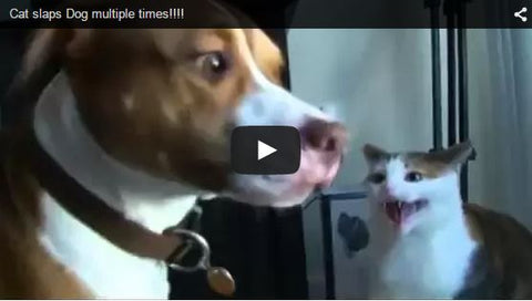 cat slaps dog