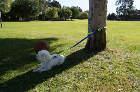 clipping dog leash to trees and poles with ease