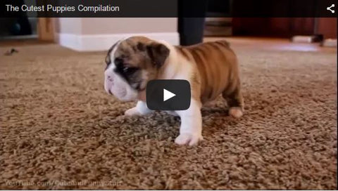 cute puppies video compilation