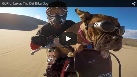 dog riding dirt bike