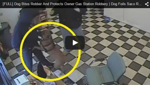 dog foils are robbery attempt
