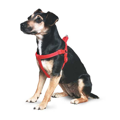 dog harness vs. dog collar