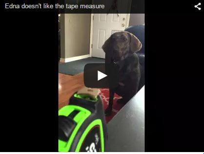 dog hates tape measure