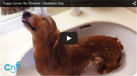 dog loves the shower