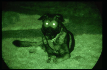 dog night vision