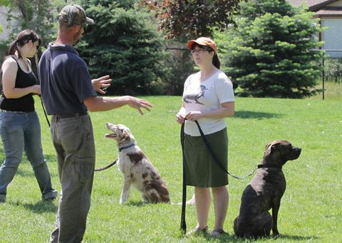 meeting people at dog obedience training school