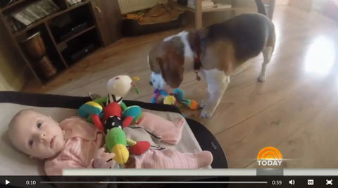 dog takes baby toy and gives it back lovingly