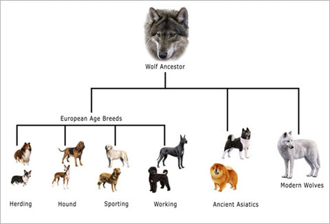 dog wolf ancestry family tree