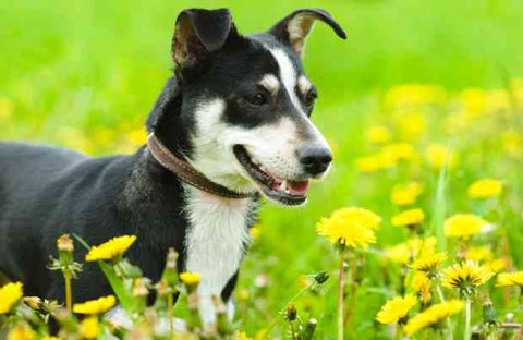dog safety eating grass plants and flowers