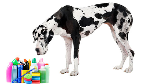 dogs and household cleaning product safety