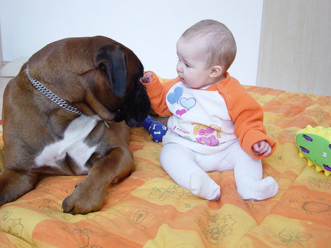 dog in love with baby