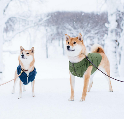 dogs of instagram awesome dog pics