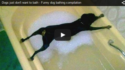 dogs who hate the bath funny video