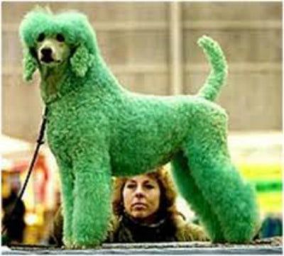 st pattys day green dog
