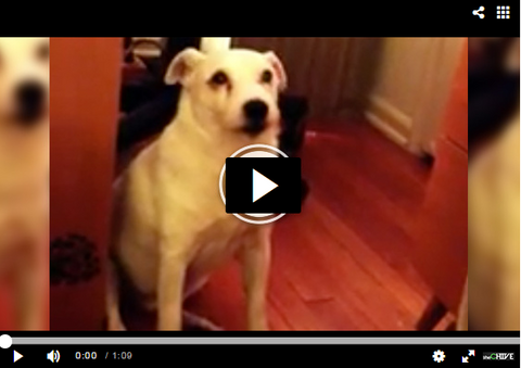 guilty dog pulls hilarious move after going through trash can