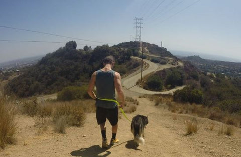 dog hikes best things to do with your dog