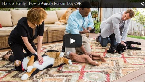 how to properly perform CPR on your dog or cat