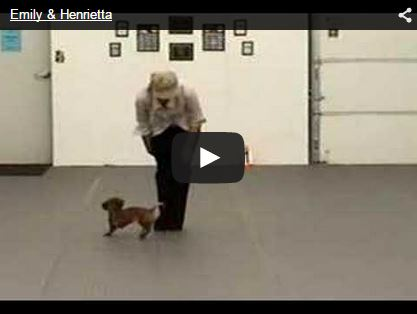 human and doxie dog dancing
