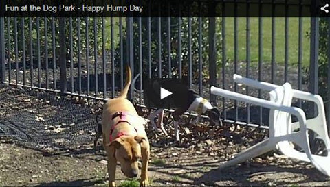 hump day dog feelin it at the dog park