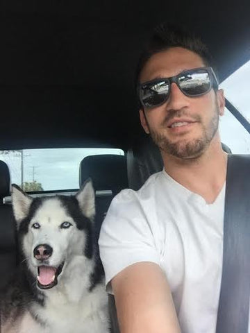 siberian husky sitting in back seat of owners car