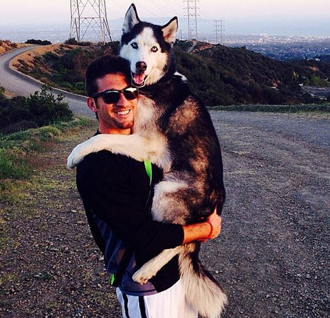 owner holding full grown siberian husky like baby