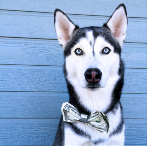 beautiful siberian husky handsome i heart miles instagram