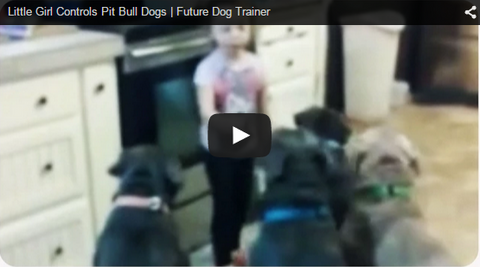 little girl training pit bulls