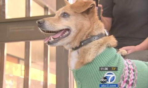 dog named Lucky rescued from la river